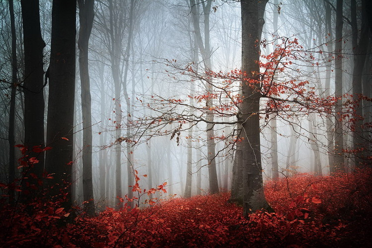 Glasbilder Forest - Red Forest