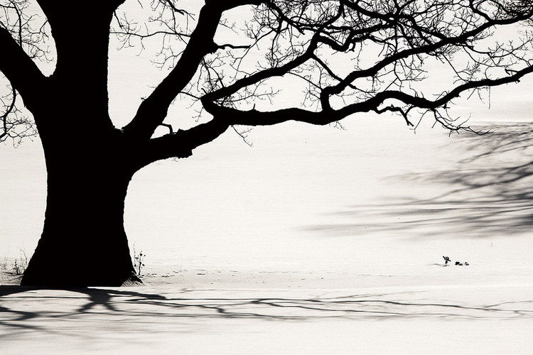 Glasbilder Tree - Black and White