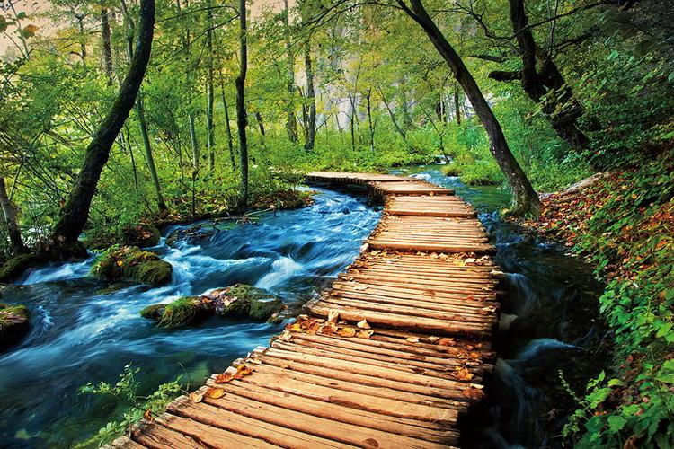 Glasbilder Wooden Path