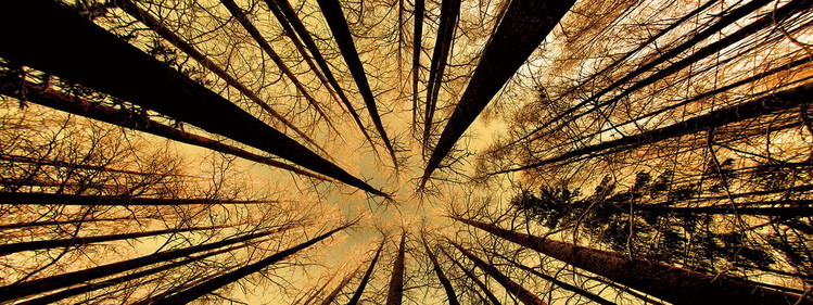 Glasschilderij Forest - Gold Sun