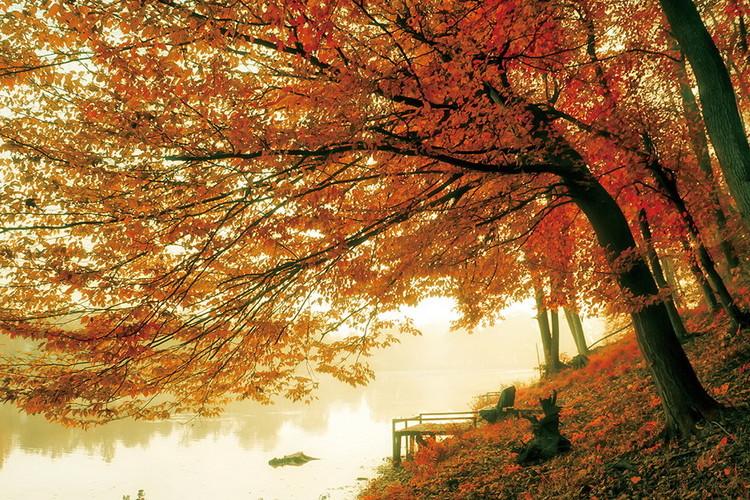 Glasschilderij Tree - Colored Tree