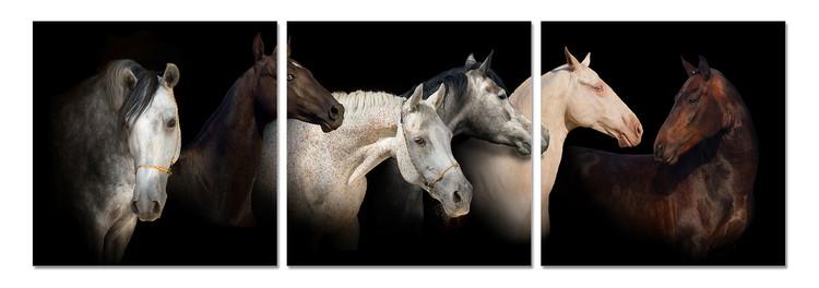 Horses Tableau Multi-Toiles