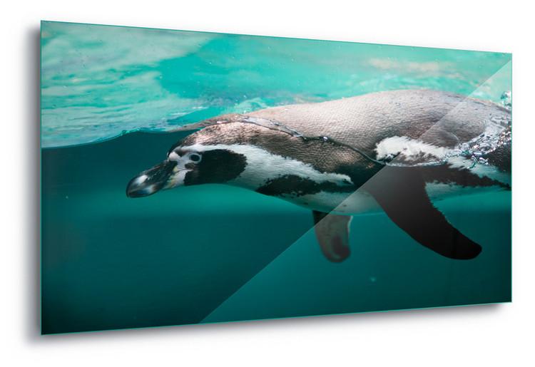 Cuadro en vidrio  Pingu