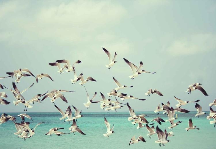 Cuadro en vidrio  Vintage Seagulls