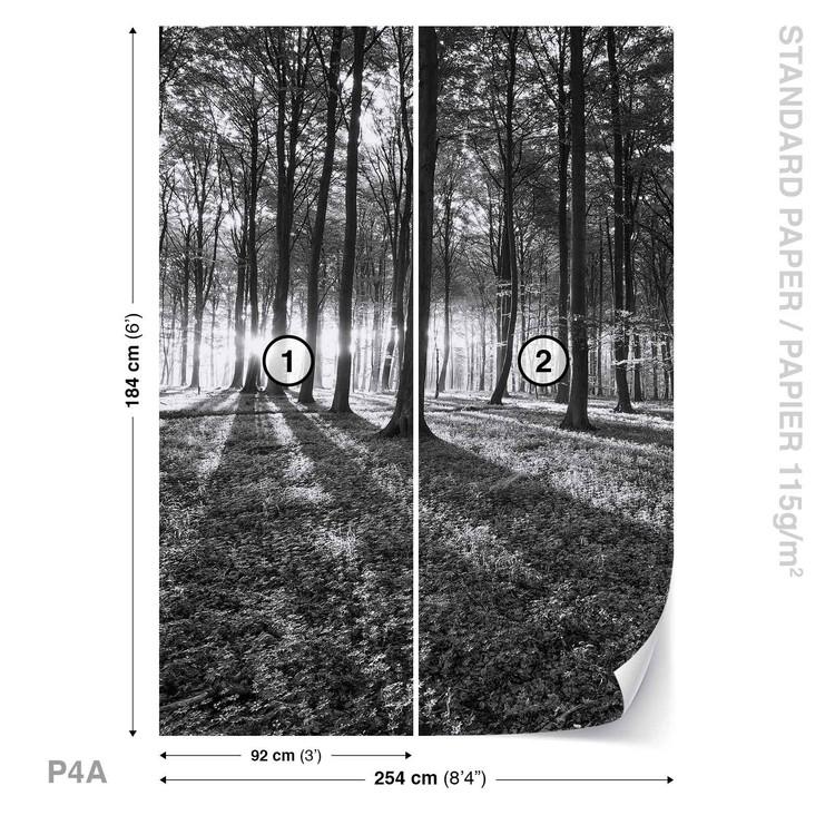 Fototapeta Černobílý les, stromy