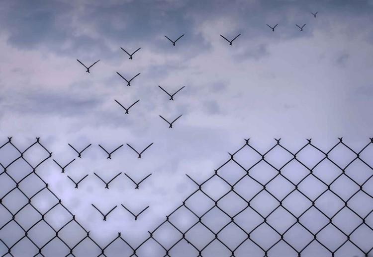 Fototapeta Don´T Fence Me In!