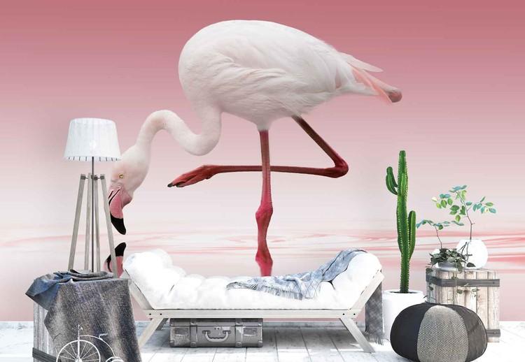 Fototapeta Flamingo