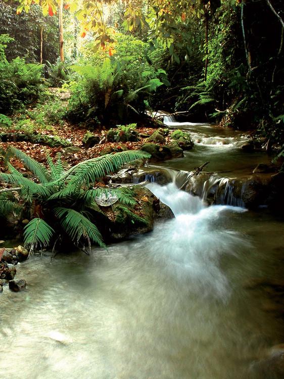 Fototapeta Jelen v lese