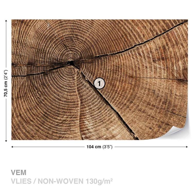 Fototapeta Letokruhy stromu