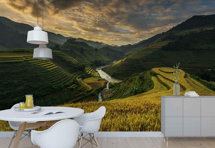 Fototapeta Rice Terrace In Vietnam