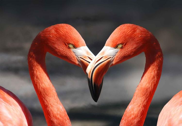 Love Flamingoes Staklena slika
