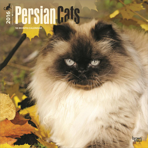 Kalendář 2017 Perská kočka
