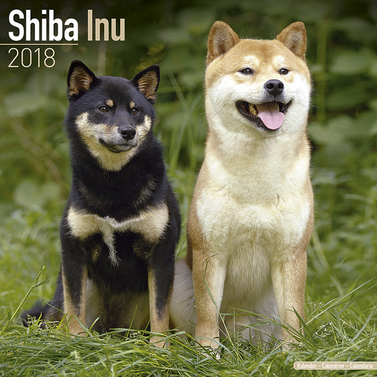 Kalend 2020 Shiba Inu