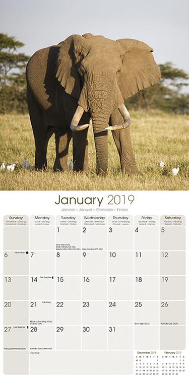 Kalendář 2020  Sloni