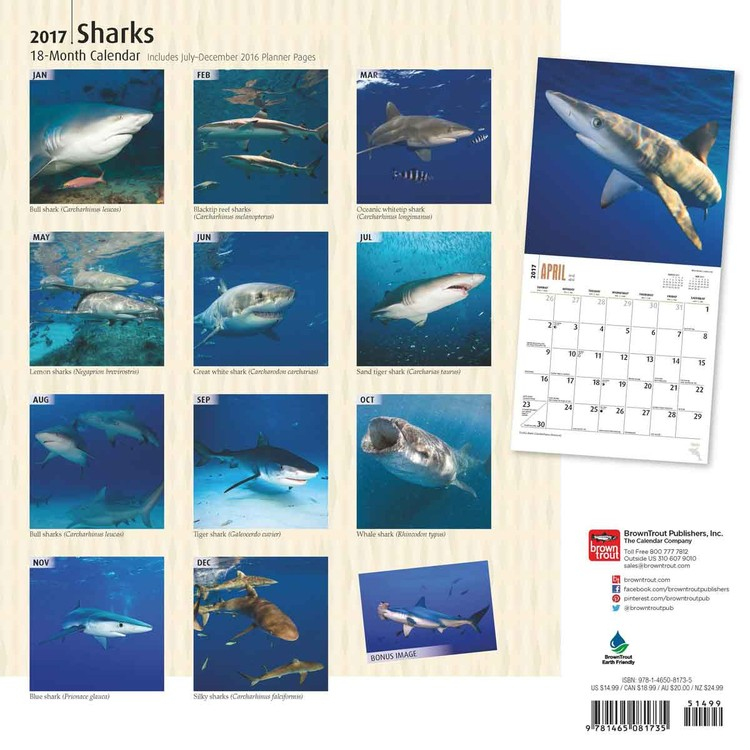 Kalendář 2018  Žraloci