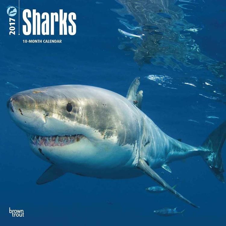 Kalendár 2017 Žraloky