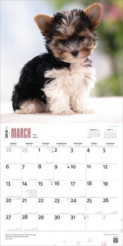 Yorkshire Terriers Kalendar 2019