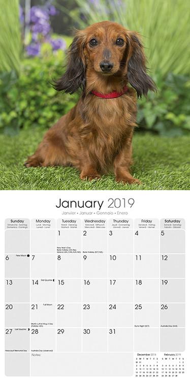 Dachshund Kalendarz 2019