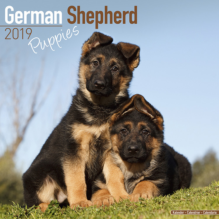 German Shepherd Puppies Kalendarz 2019