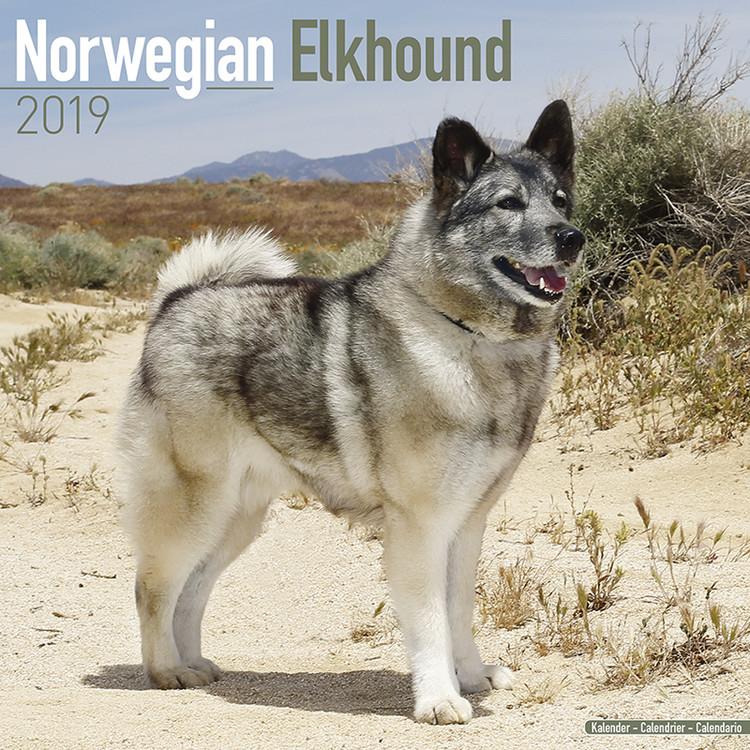 Norwegian Elkhound Kalendarz 2019