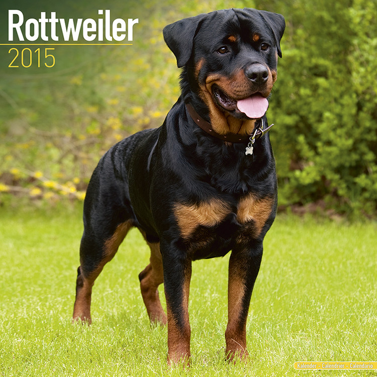 Rottweiler Kalendarz 2017