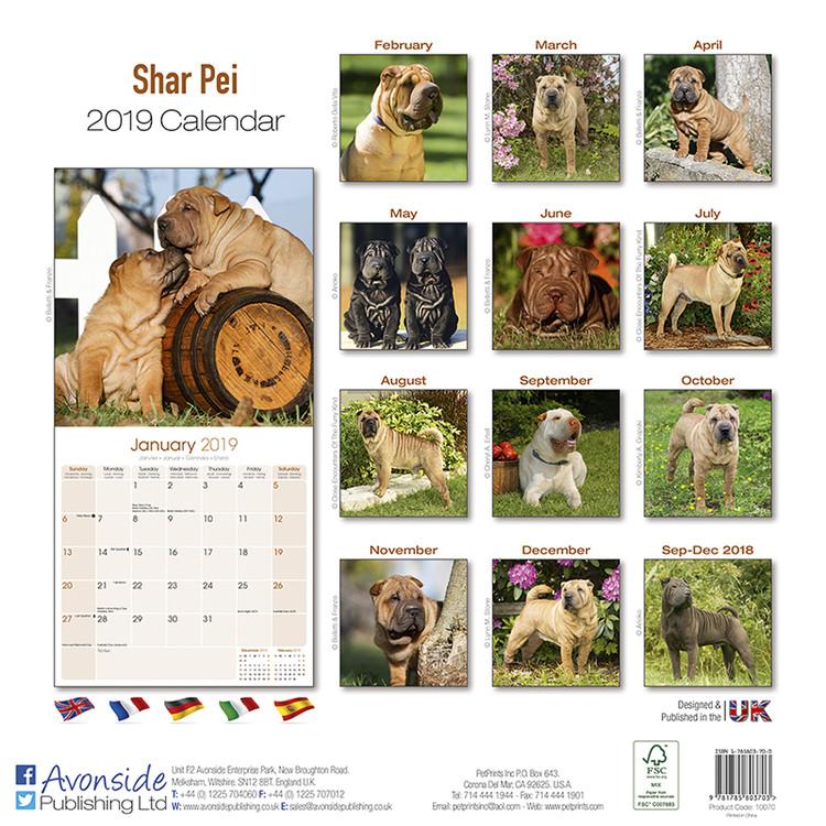 Shar Pei Kalendarz 2019