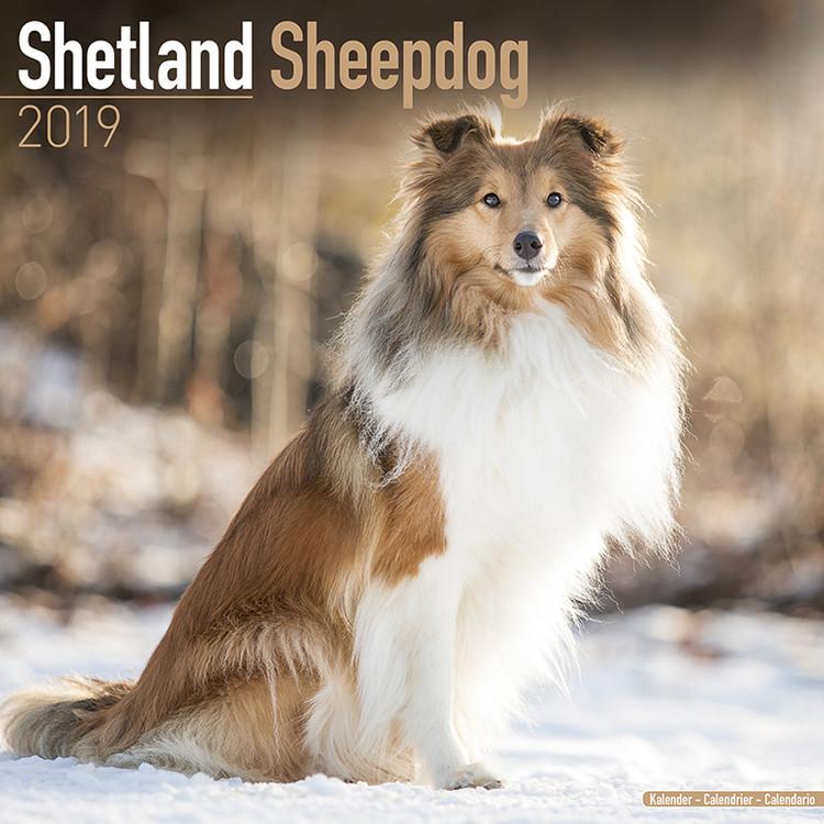 Shetland Sheepdog Kalendarz 2019