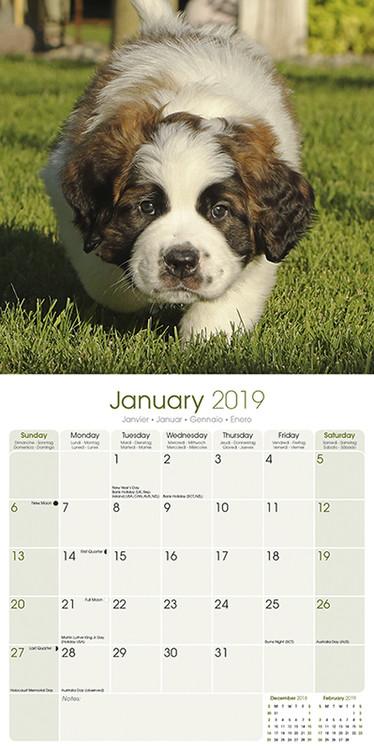 St Bernard Kalendarz 2019
