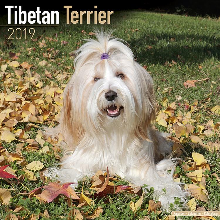 Tibetan Terrier Kalendarz 2019