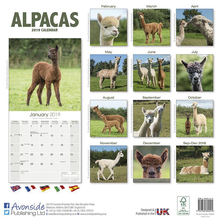 Kalender 2019  Alpacas