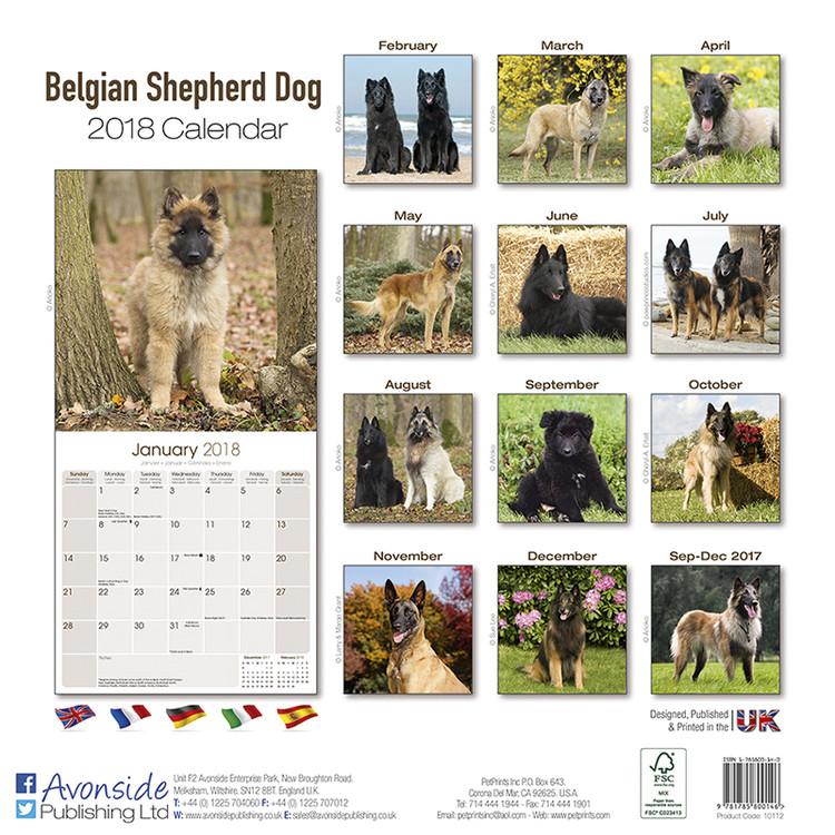 Belgian Shepherd Dog Kalender 2019