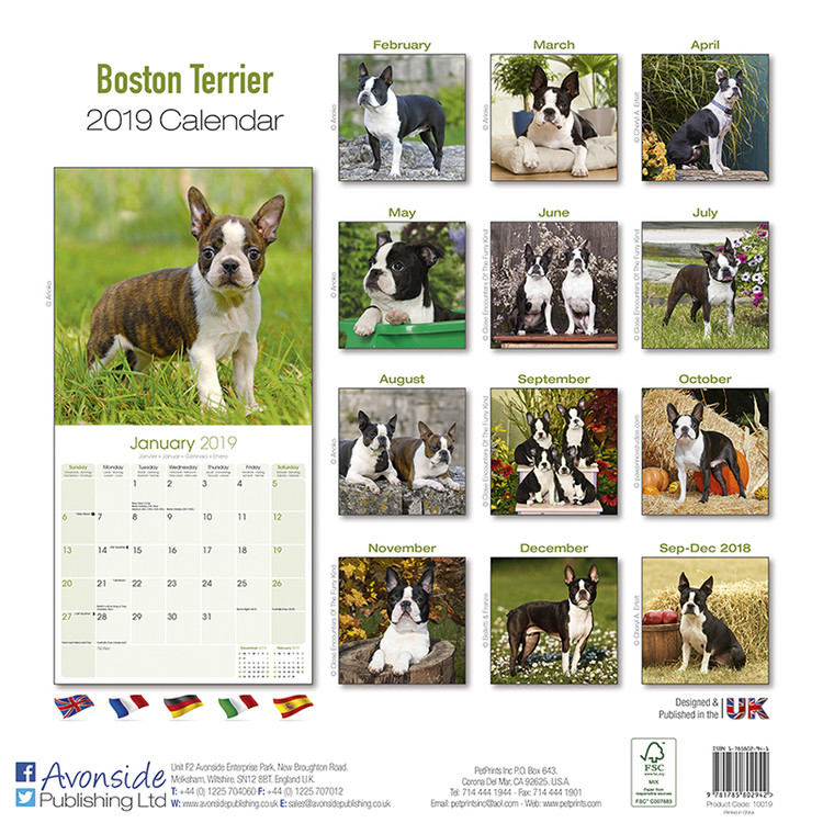 Kalender 2019  Boston Terrier