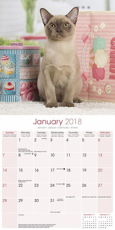 Cats - Burmese Kalender 2019