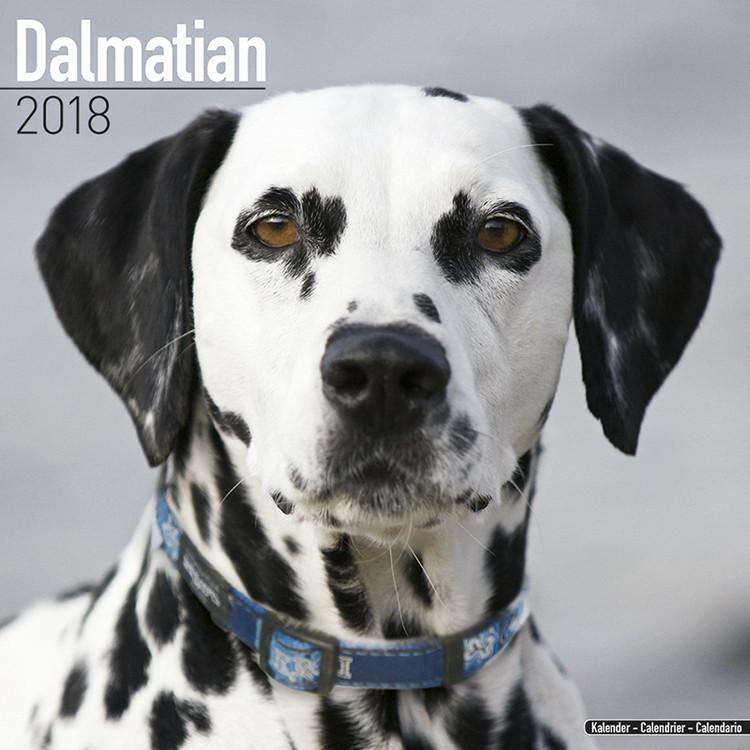 Dalmatian Kalender 2019