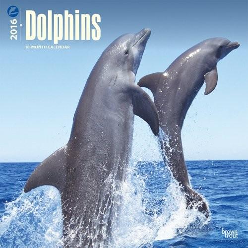 Kalender 2017 Delphin