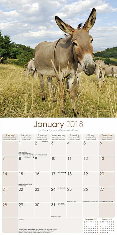 Donkeys Kalender 2019