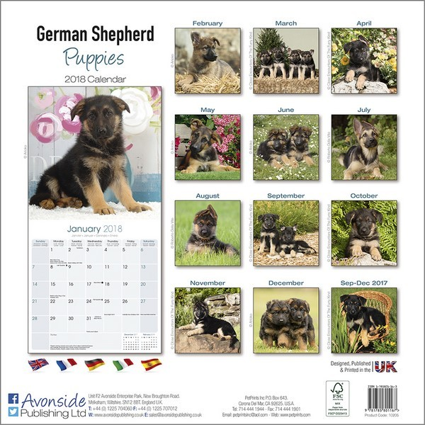 german shepherd kalender 2019 kj p hos europosters. Black Bedroom Furniture Sets. Home Design Ideas
