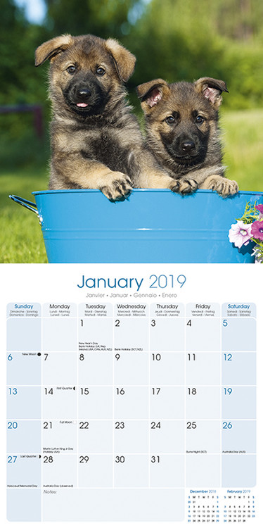kalender 2019 german shepherd bei europosters. Black Bedroom Furniture Sets. Home Design Ideas