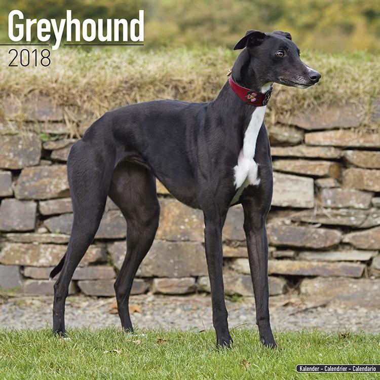 Greyhound Kalender 2018