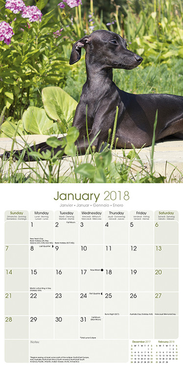 Italian Greyhound Kalender 2018
