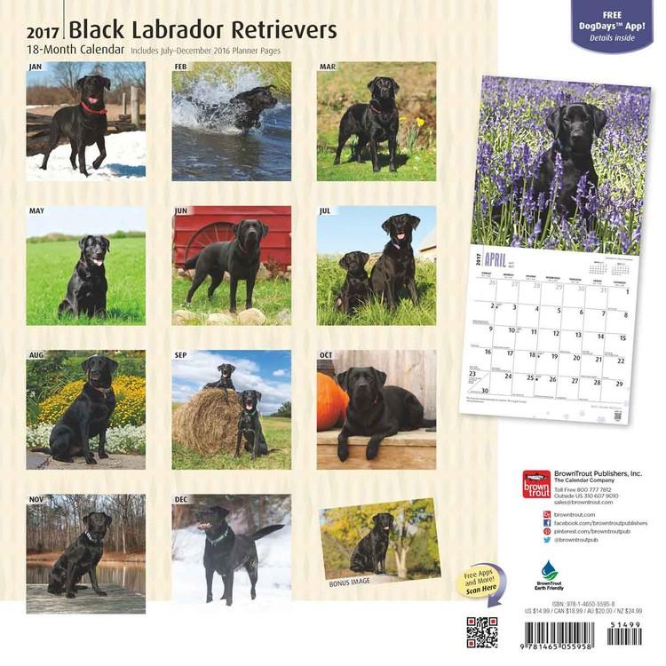 Labrador Retriever - Black Kalender 2018