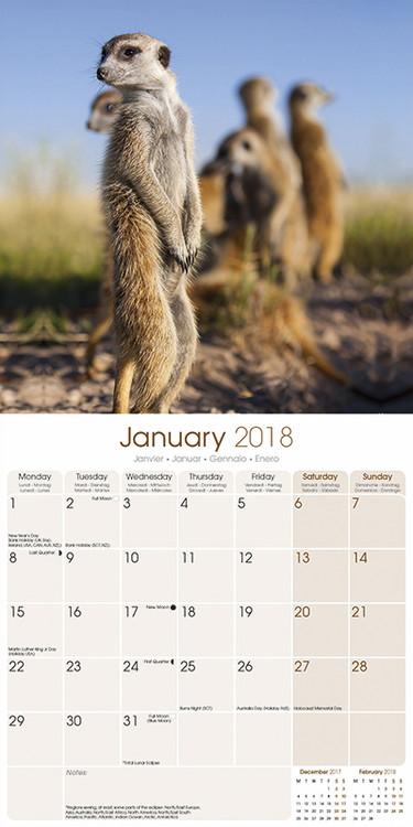 Meerkats Kalender 2019