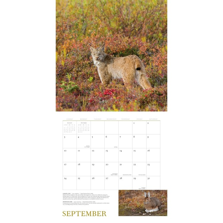 Wild Nature Kalender 2018