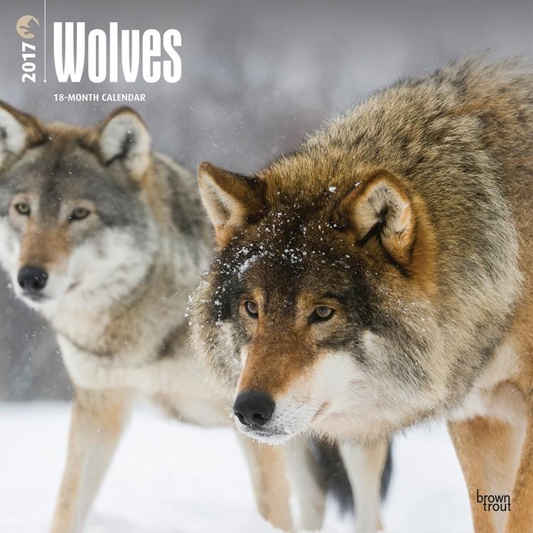Kalender 2019 -  Wolves
