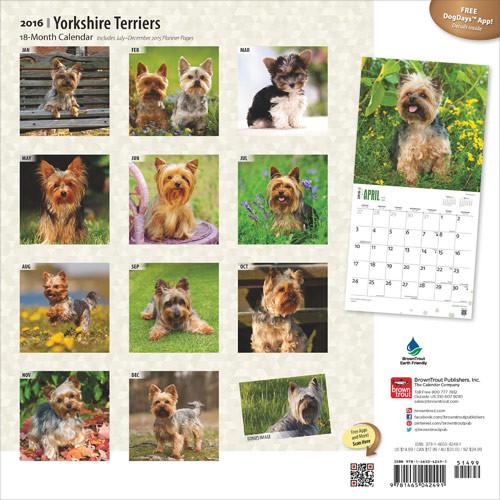 Yorkshireterriër Kalender 2019