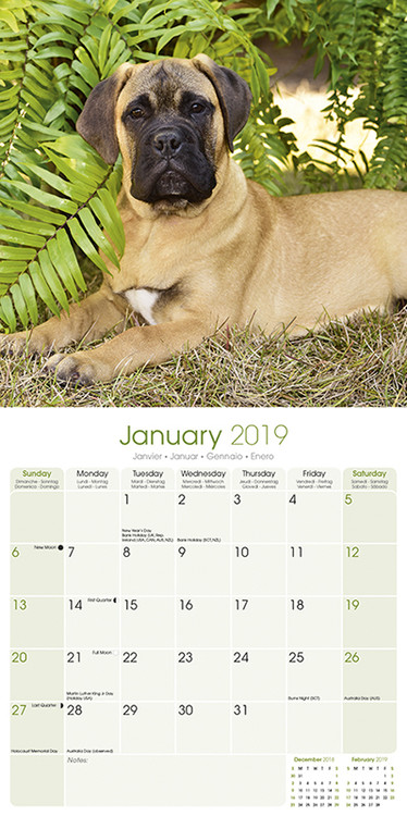 Mastiff Kalender 2020