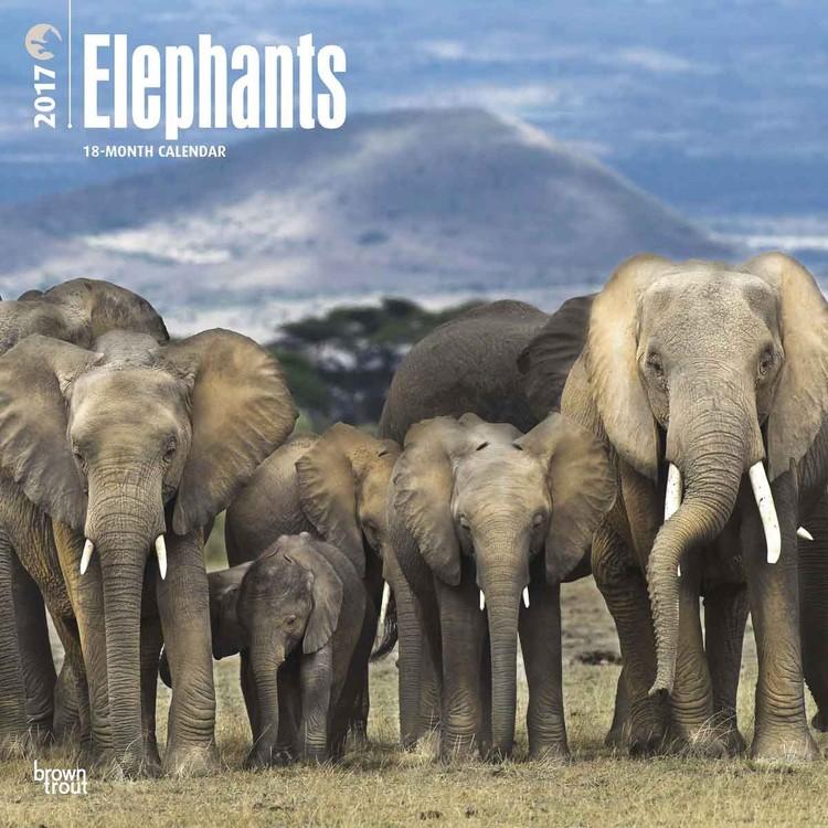 Elefant Kalender 2017