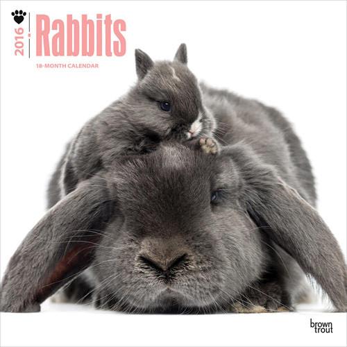 Kaniner Kalender 2019 På Europostersdk