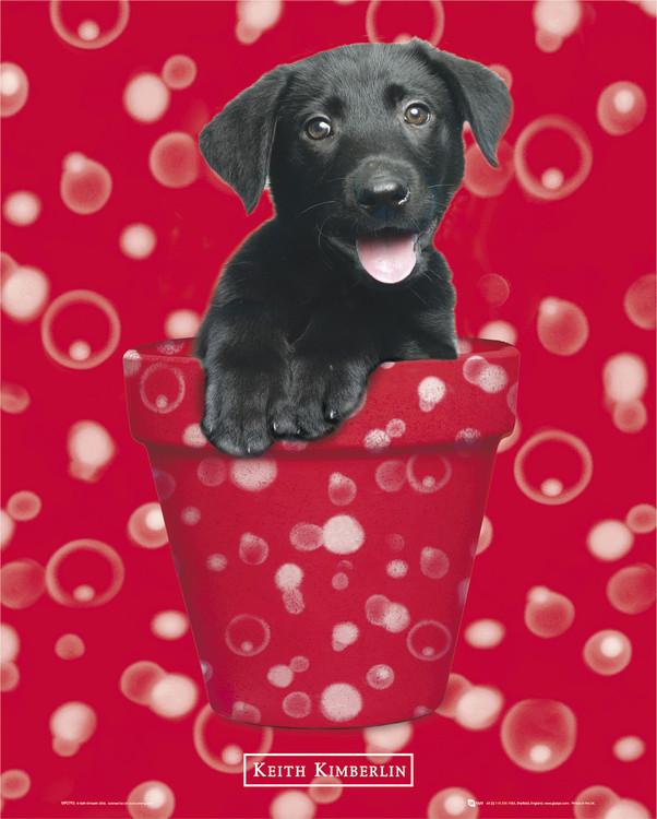 KEITH KIMBERLIN - red - плакат (poster)