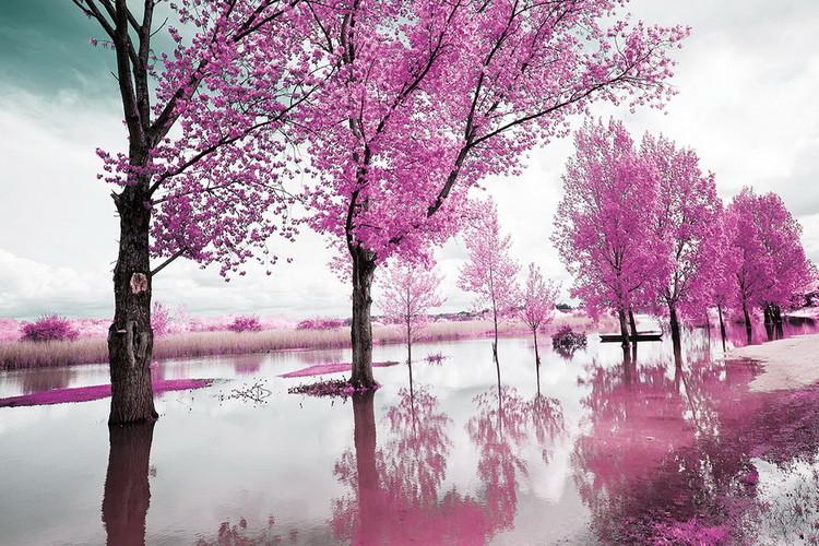 Kunst op glas Pink World - Blossom Tree 1